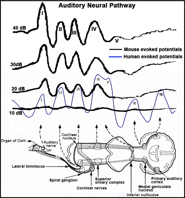 mpd  johnson3  project protocol